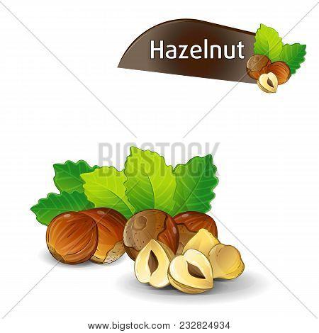 Hazelnut Kernel With Green Leaves Isolated On White Background Illustration. Organic Food Ingredient