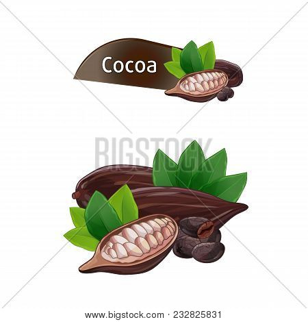 Cocoa Pod And Bean With Green Leaves Set Isolated On White Background Illustration. Chocolate Desser
