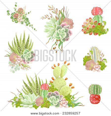 Collection Of Decorations With Cactus And Succulents, Vector Illustration For Your Design.