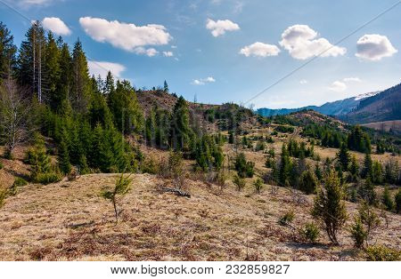 Forested Rolling Hills In Springtime. Lovely Nature Scenery