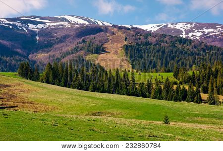 Beautiful Countryside With Snow On Mountain Top. Lovely Mountainous Landscape With Spruce Forest In