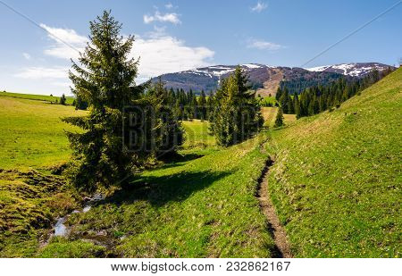 Narrow Footpath Along The Forested Hills. Beautiful Landscape Of Carpathian Mountains In Springtime.