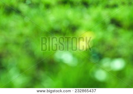 Blur Background Dream Bokeh Leaf Sunny Day Background Concept For Modern Eco Spring Banner Decoratio