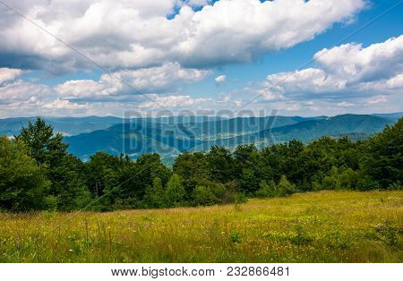 Grassy Meadow With Wild Herbs In Mountains. Beautiful Scenery Among The Forest On A Summer Day. Grea