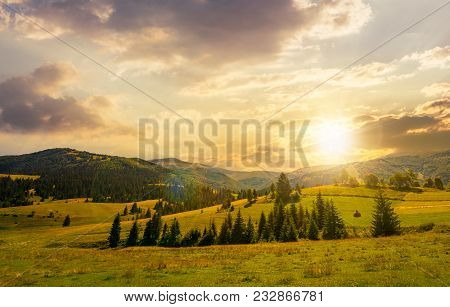 Beautiful Countryside Summer Landscape At Sunset. Spruce Trees On A Rolling Grassy Hills At The Foot