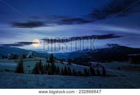Beautiful Countryside Summer Landscape At Night In Full Moon Light. Spruce Trees On A Rolling Grassy