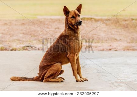 Stray Dog Sitting On A Cement Floor.