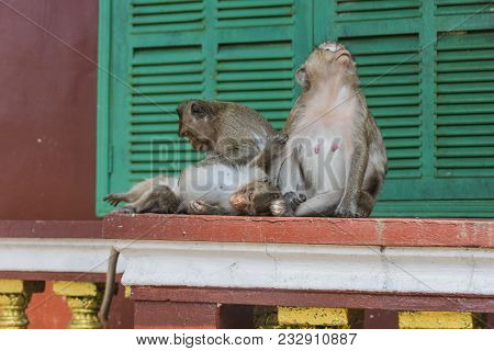 Couple Of Monkeys With Their Son At The Time Wat Leu Sihanoukville Cambodia