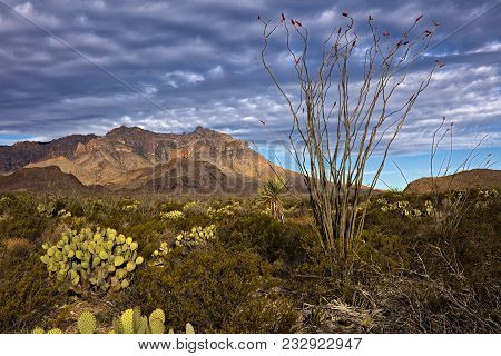 Chihuahuan Desert In Big Bend National Park, Texas.