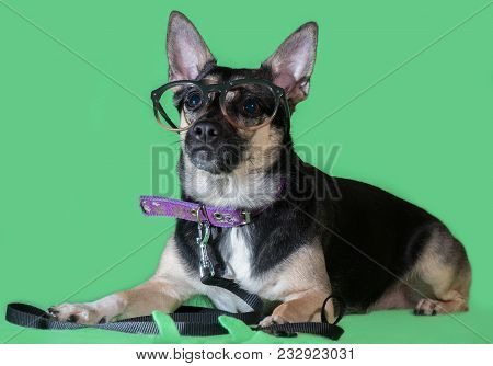Funny Dog Mongrel With Glasses On A Green Background