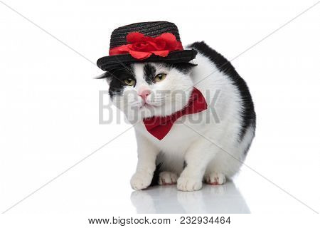 classy cat with red bow tie and black hat sitting on a white background