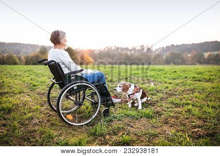 A Senior Woman In Wheelchair With Dog In Autumn Nature. Senior Woman On A Walk On A Grassland.