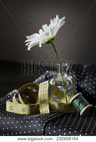 Still Life With White Daisy Flower In The Small Vintage Glass Botlle, Measure Tape, Spool Of Thread