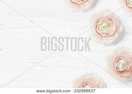 Styled Stock Photo. Feminine Desktop Mockup With Buttercup Flowers, Ranunculus, Empty Space And Shab