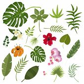 Tropical leaves and flowers. Set isolated palm and flowers exotic leaf plant floral hawaii botany decoration botanical foliage tree monstera banana flora. Vector illustration forest collection tropic branch. poster