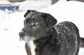 On wool black pooch snow. Winter day poster