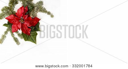Poinsettia Flower With Fir Tree And Snow On White Background. Greetings Christmas Card. Postcard. Ch
