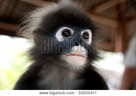 portrait of a wild monkey