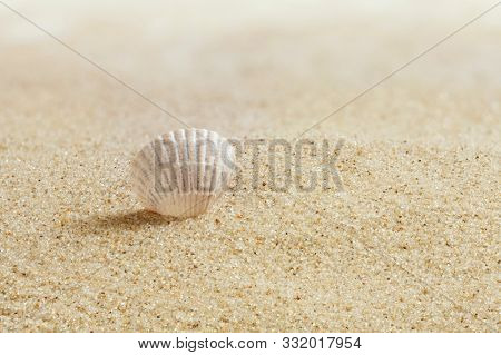 Shell in the sand. Sandy beach. Macro photo. Summer, early morning.