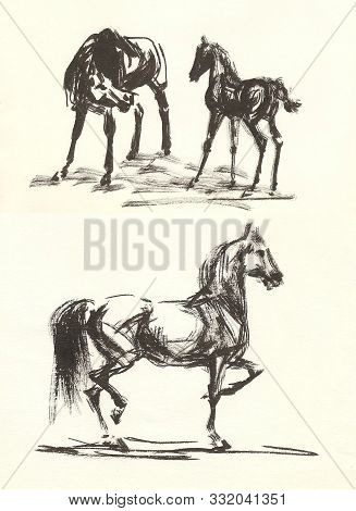 Prancing Arabian Stallion And Mare With Foal, Monochrome, Black And White Drawing Of Dry Bone On Pap