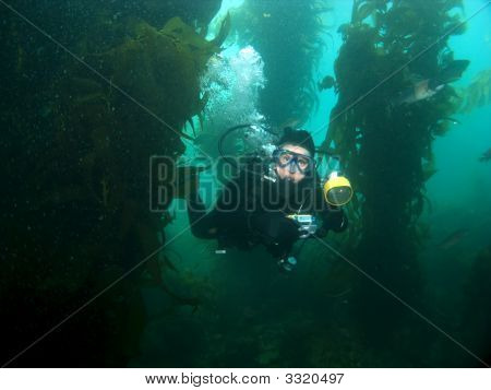 Underwater Photographer Swimming Through The Kelp