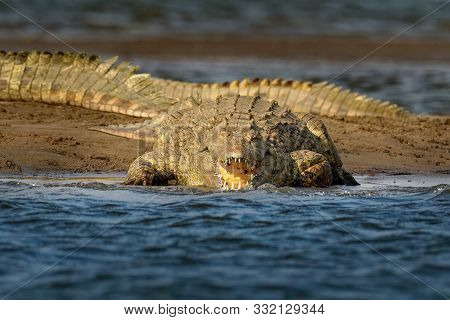 Nile Crocodile - Crocodylus Niloticus Large Crocodilian Native To Freshwater Habitats In Africa, Lay