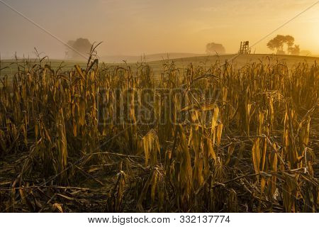 Corn Left In The Field To Lure Animals. In The Background The Hunting Tower Is Visible