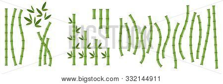 Big Set Of Green Bamboo Branches And Leaves. Vector Illustration. Bamboo Stems. Bamboo Icon.