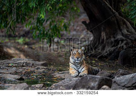 Ranthambore Legendary Tigress Krishna Or T19 Resting On Rocks Near Water With Beautiful Surrounding