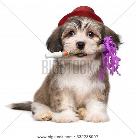 Cute Havanese Puppy With New Year's Trumpet And Added Red Party Hat