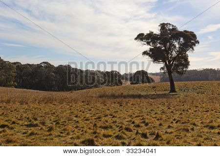 A Rural Landscape. Tablelands Near Oberon. New South Wales. Australia.