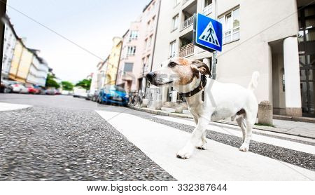 Dog And Owner  With Leash Crossing Street