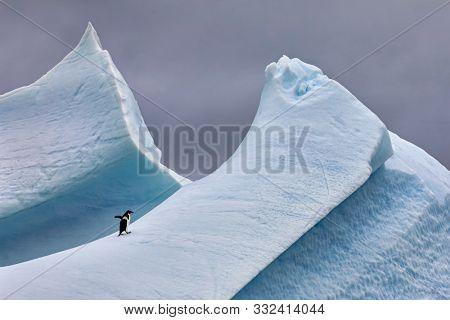 Adélie penguin walking up a steep, angular iceberg in Antarctica.