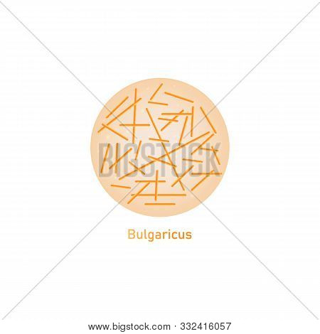 Bulgaricus Lactic Acid Bacteria Or Probiotic Macro Vector Illustration Isolated.