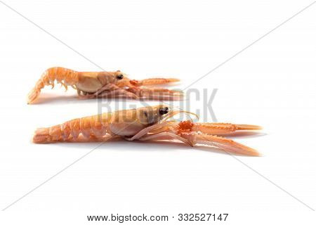 Two Fresh Scampi Also Called Langoustine Or Norway Lobster, Expensive Seafood Isolated On A White Ba