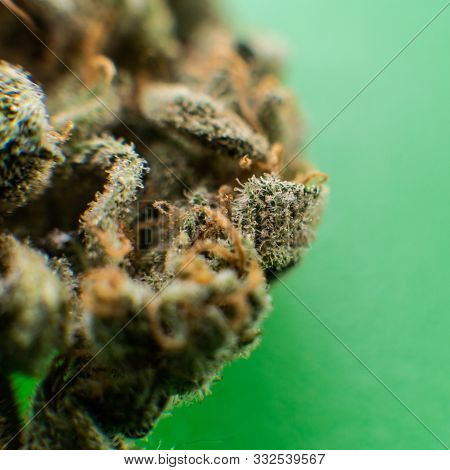 Explore Cannabis Strains With A New Perspective. Cannabinoid And Terpene Profile, Terpenes In Indica