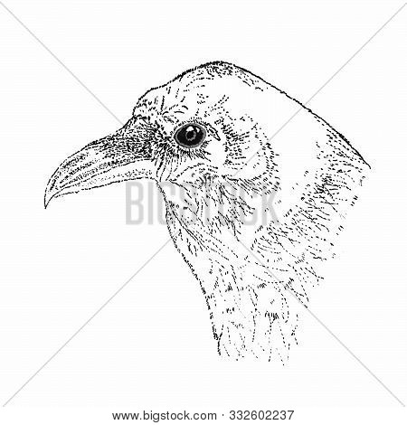 Raven In Pointillism Technique On A Liner On A White Background