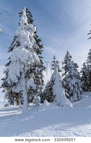 Sunny Wintery Bohemian Forest Shows Snow-covered Trees - Austria