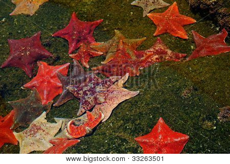 Star Fish Colony