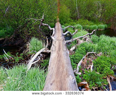 Walk On The Log - Riparian Scene In The Spring Along The Metolius River - North Of Camp Sherman, Or