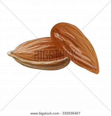 Dried Almonds Icon. Cartoon Of Dried Almonds Vector Icon For Web Design Isolated On White Background
