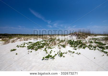 Sand Dunes At Cumberland Island National Park.