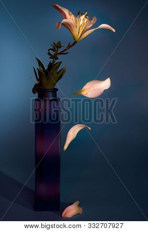 Close Up Of Lily Flower With Falling Petals