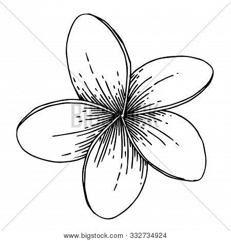 Vector Exotic Tropical Hawaiian Summer Flower. Black And White Engraved Ink Art. Isolated Flowers Il