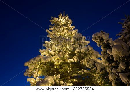 Snow Covered Oine Tree With Glowing Christmas Decoration Outdoor, At Blue Hour Evening Time.