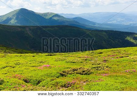 Beautiful Atmospheric Contrasty View Of Chornohora Mountains From Mount Hoverla With Blooming Rhodod
