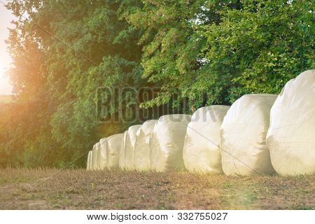 Row Of Plastic Wrapped Silage Or Haylage Bales