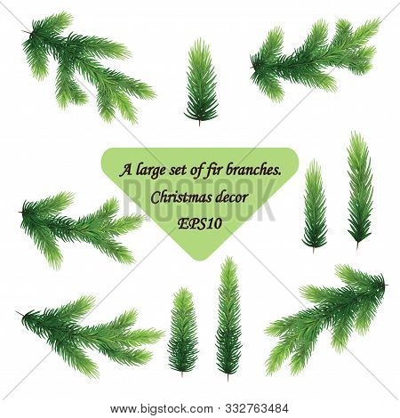 Set Of Fir Branches. Christmas Tree Or Pine Branch Vector Evergreen Illustration.realistic Green Pin