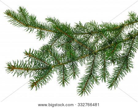 Fir Tree Branches Isolated. Branch Tree, Fir Evergreen Twig To Xmas Holiday . Isolated On White With