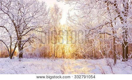 Beautiful Snowy Winter Landscape Panorama With Forest And Sun. Winter Sunset In Forest Panoramic Vie